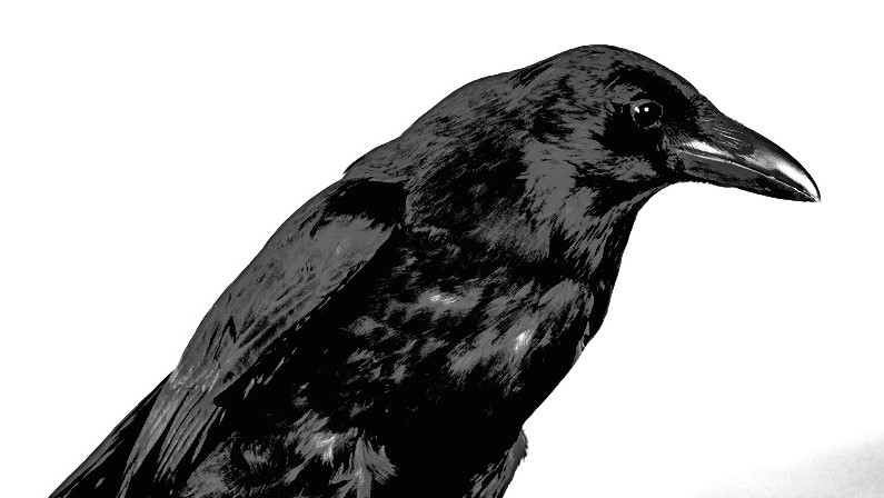 Korespondenční cvičení 02 – vrána